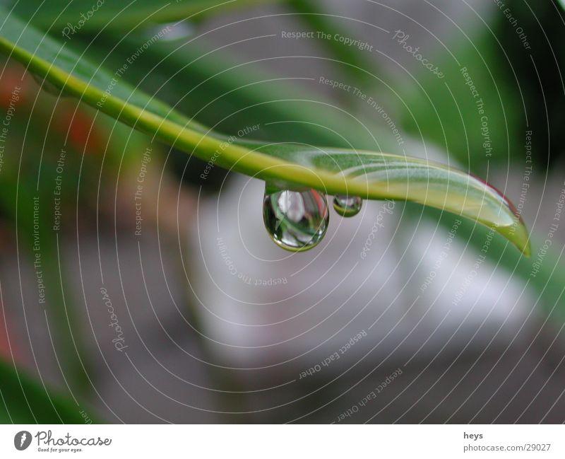 Wasser.Tropfen Blume Regen Wassertropfen