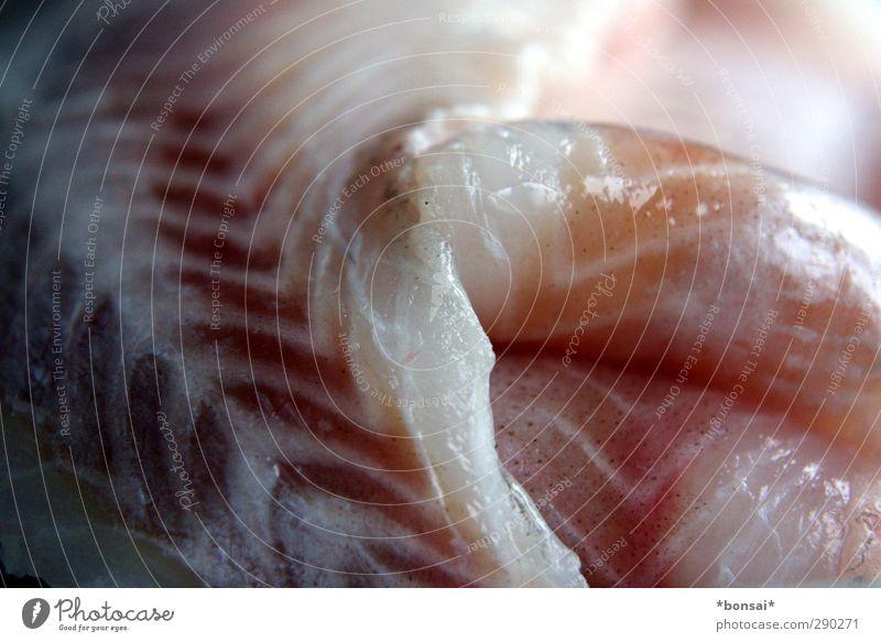 mittagsfisch Natur kalt Tod Gesundheit Gesunde Ernährung natürlich Lebensmittel frisch Tierhaut Fisch genießen Appetit & Hunger lecker Angeln Duft