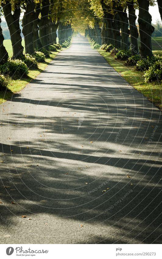 geradewegs Natur Sommer Pflanze Baum Einsamkeit Blatt Erholung Umwelt Straße Herbst Wege & Pfade Schönes Wetter ästhetisch Ziel Asphalt Ende