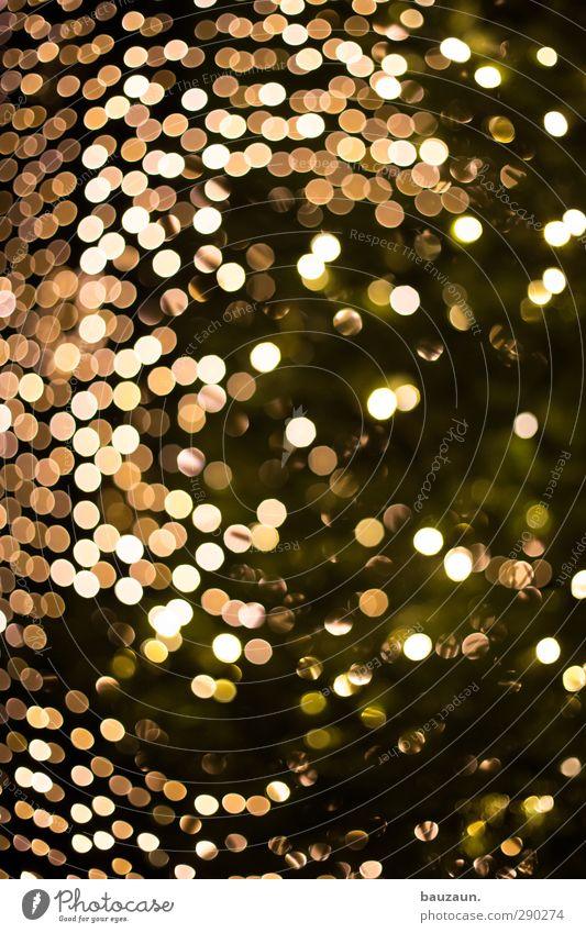last christmas. Weihnachten & Advent Pflanze grün Baum Winter schwarz Gefühle Feste & Feiern Stimmung glänzend träumen leuchten Dekoration & Verzierung Idylle gold Veranstaltung