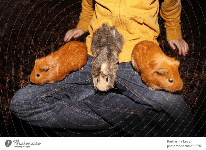 Meerschweinchen-Allerlei Hose Pullover Jeanshose Tier Haustier Tiergesicht Fell Streichelzoo Nagetiere 3 Tiergruppe Tierfamilie klein natürlich niedlich blau