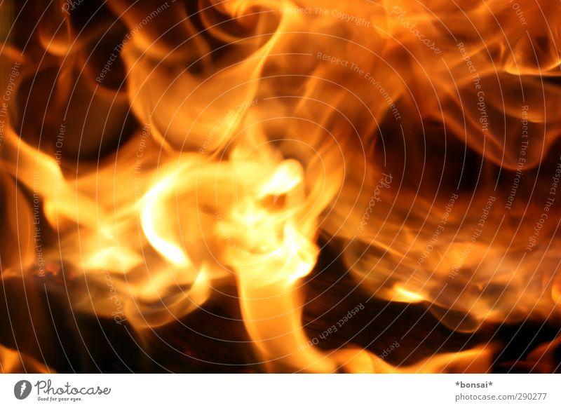 feuer! Natur gelb Wärme Bewegung hell glänzend orange wild leuchten Kraft ästhetisch bedrohlich Warmherzigkeit Urelemente Feuer rein