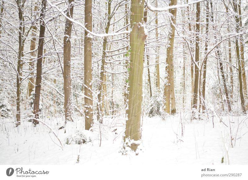 Winterwonderland Natur Tier Eis Frost Schnee Pflanze Baum Sträucher Blatt Grünpflanze Wildpflanze Wald dunkel Kitsch natürlich wild Schutz Geborgenheit