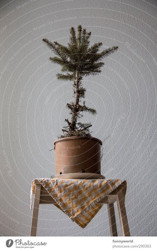 ready for abtransport Weihnachten & Advent Weihnachtsbaum Anti-Weihnachten Baum Topfpflanze Tanne alt kaputt Krankheit Traurigkeit Einsamkeit vergangen Farbfoto
