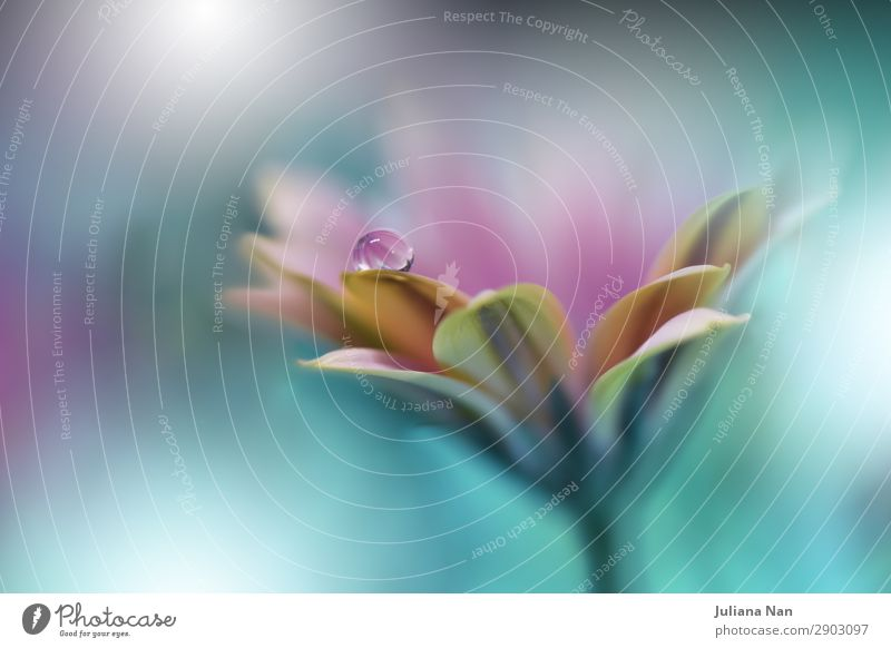 Schöner Naturhintergrund, natürliche blumige abstrakte Kunst. Lifestyle elegant Stil Design Erholung Meditation Kunstwerk Umwelt Wassertropfen Pflanze Blume