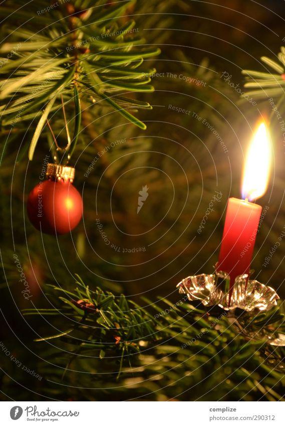 Etwas zu früh, aber bald ist Weihnachten Feste & Feiern Weihnachten & Advent Winter Pflanze Baum Grünpflanze Häusliches Leben gold grün rot Weihnachtsbaum Kerze