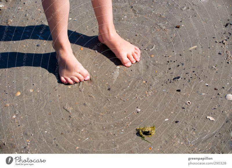 Kinderfüßchen am Strand Kinderfuß Ferien & Urlaub & Reisen Badeurlaub Krabbe Muschel Mädchen Junge Familienausflug Fuß Barfuß Sand Zehen Nagel Zehennagel
