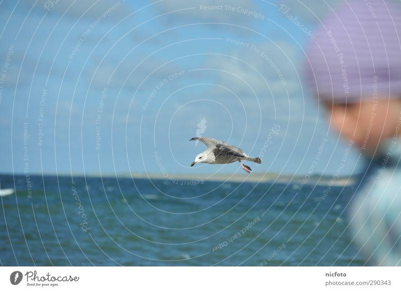 Die Möwe im Blickfeld Umwelt Natur Wasser Himmel Vogel fliegen rennen Farbfoto Außenaufnahme Tag Unschärfe Zentralperspektive