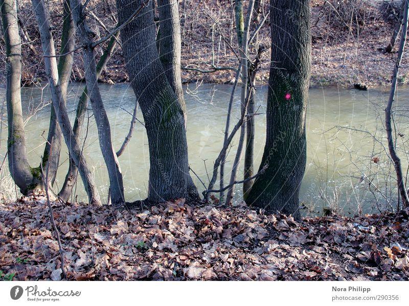who the fuck is pretty? Umwelt Natur Pflanze Wasser Schönes Wetter Baum Sträucher Blatt Bach Fluss entdecken dehydrieren Wachstum kalt trocken blau Frieden