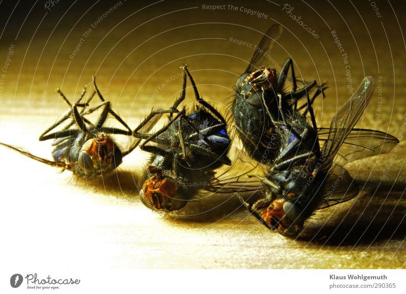 4 auf einen Streich Tier Totes Tier Fliege Tiergesicht Flügel Tiergruppe liegen blau braun gelb grau schwarz Tod Insekt Nekropole Farbfoto Innenaufnahme