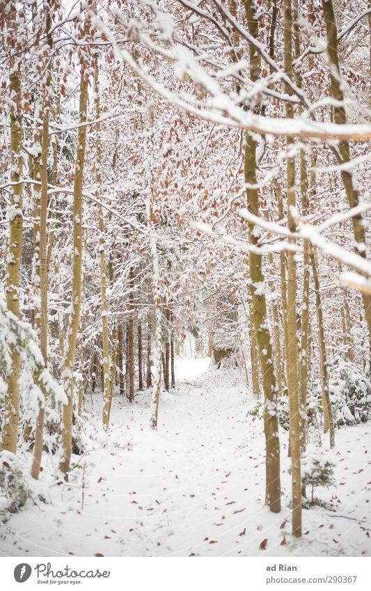 Winterwonderland II Natur Eis Frost Schnee Pflanze Baum Sträucher Blatt Wald kalt natürlich Farbfoto Tag Totale