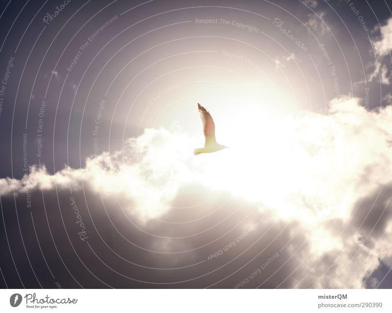 Himmelsvogel. Himmel (Jenseits) Sonne Wolken Küste Luft Vogel Kunst fliegen Zufriedenheit ästhetisch Symbole & Metaphern Frieden Möwe Leichtigkeit friedlich