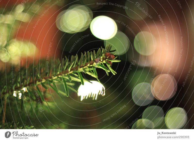 Tannenzauber Umwelt Natur Pflanze Baum Konifere Weihnachtsbaum entdecken Erholung Feste & Feiern glänzend leuchten Blick träumen Wachstum fantastisch