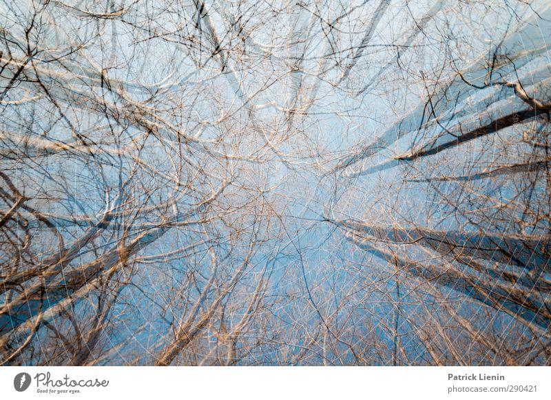 All to All Himmel Natur blau Pflanze Baum Landschaft Wald Umwelt Leben Bewegung Frühling Wetter Wachstum Schönes Wetter Perspektive ästhetisch