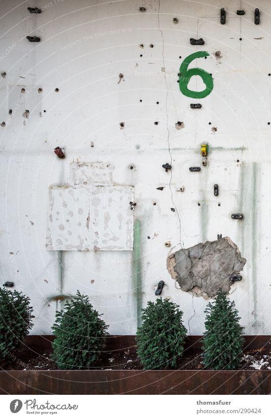 6 oder sex sells ;) Haus Garten Baustelle Pflanze Sträucher Thuja Konifere Mauer Wand Fassade Putz Zeichen Schriftzeichen Ziffern & Zahlen braun grün weiß