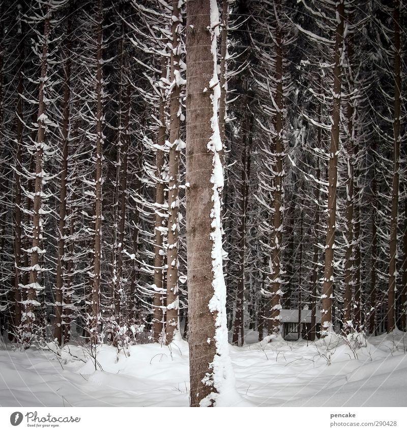 unterbesetzt | die 1. reihe Natur Baum Winter Landschaft nackt Wald Schnee einzeln einzigartig Ziffern & Zahlen nachhaltig stagnierend erste Sitzreihe besetzen