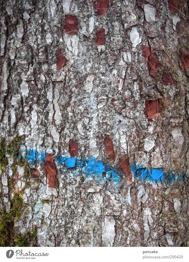 unterbesetzt | unterbesetztzeichen Natur Pflanze Baum Farbe Wald Holz Schilder & Markierungen Kommunizieren planen Streifen Schnur Zeichen Information Ende
