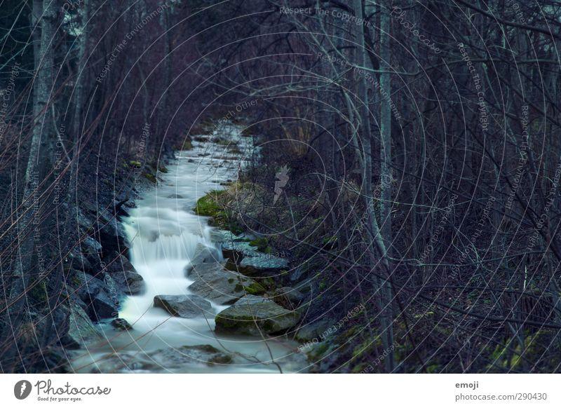 ghosts Umwelt Natur Landschaft schlechtes Wetter Wald Bach dunkel kalt mystisch Farbfoto Außenaufnahme Menschenleer Abend Langzeitbelichtung Bewegungsunschärfe