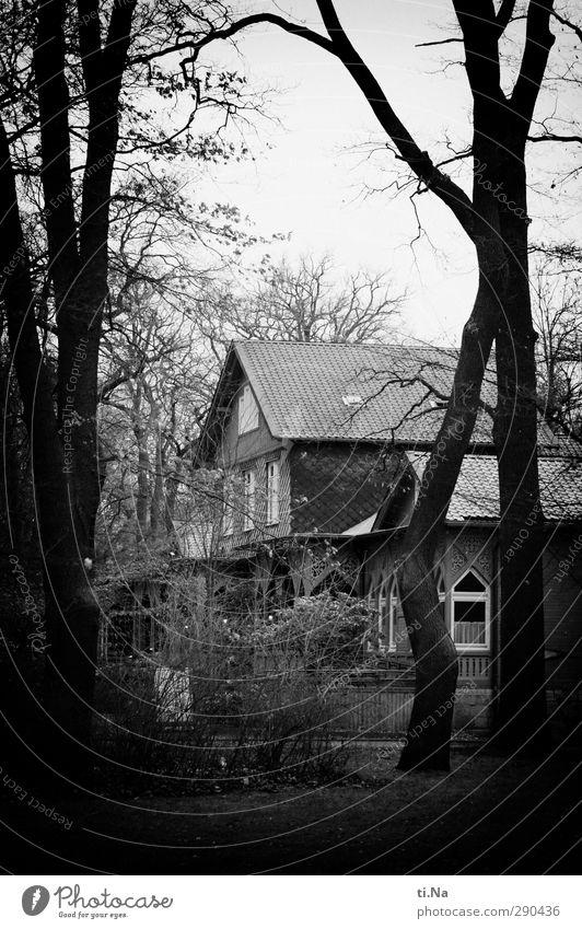 Braunschweig Winter schlechtes Wetter Baum Park Traumhaus Häusliches Leben alt dunkel gruselig grau schwarz silber weiß Schwarzweißfoto Außenaufnahme Tag Abend