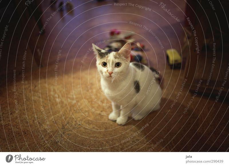 lina Tier Haustier Katze 1 Tierjunges schön Schüchternheit Farbfoto Innenaufnahme Menschenleer Abend Kunstlicht Tierporträt Blick Blick in die Kamera
