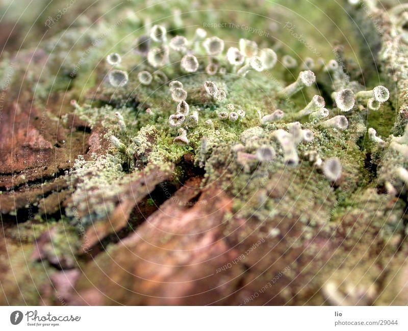 pilzfeld Holz Baumrinde Pilz verfaulen Natur Makroaufnahme