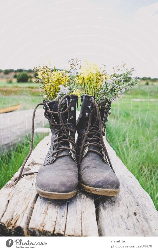 Alte Stiefel mit Blumenfüllung Lifestyle Stil Garten Umwelt Natur Pflanze Frühling Sommer Gras Blüte Wildpflanze Topfpflanze Holz alt frisch Billig gut schön