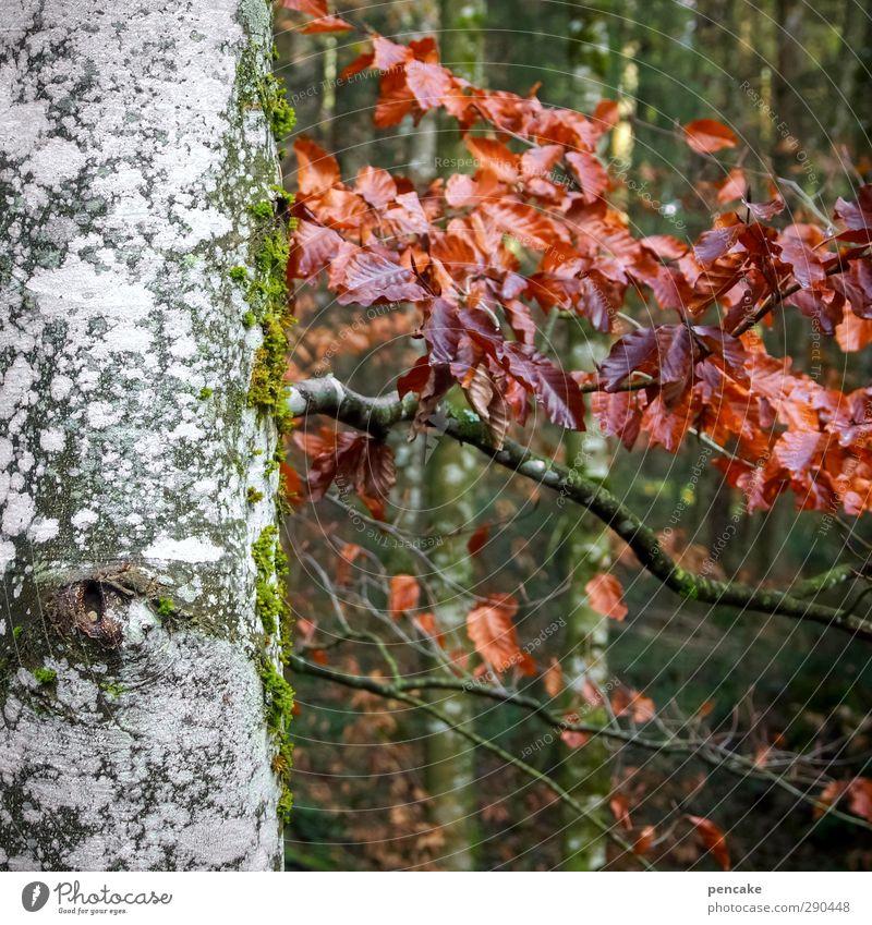 unterbesetzt | buchen Natur schön Baum Erholung Landschaft ruhig Wald Leben Holz Freiheit Erde Zufriedenheit wandern authentisch Ausflug Zukunft