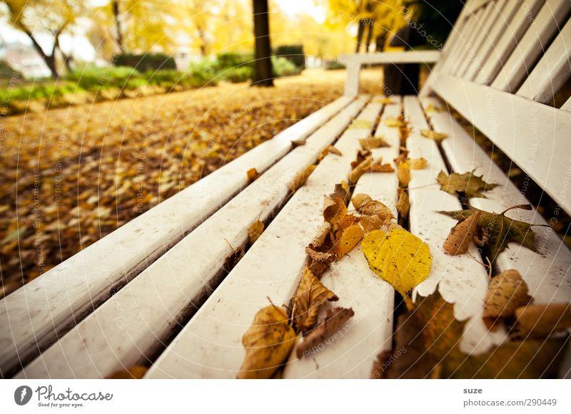 Unterbesetzt | Nehmen Sie Platz Umwelt Natur Herbst Wetter Stadtrand Park Holz authentisch schön gelb weiß Einsamkeit Pause ruhig Herbstlaub herbstlich