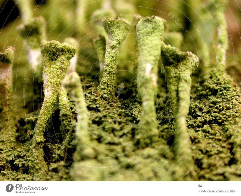 mushroom Holz Baumrinde Pilz verfaulen Natur Makroaufnahme
