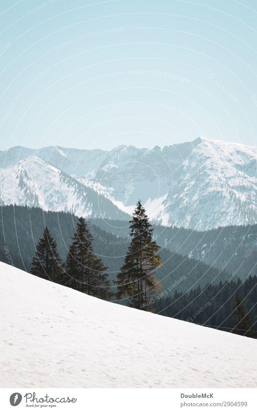 Alpenlandschaft mit Schnee, Tannen und Bergen Ausflug Ferne Freiheit Berge u. Gebirge wandern Natur Landschaft Luft Himmel Wolkenloser Himmel Schönes Wetter