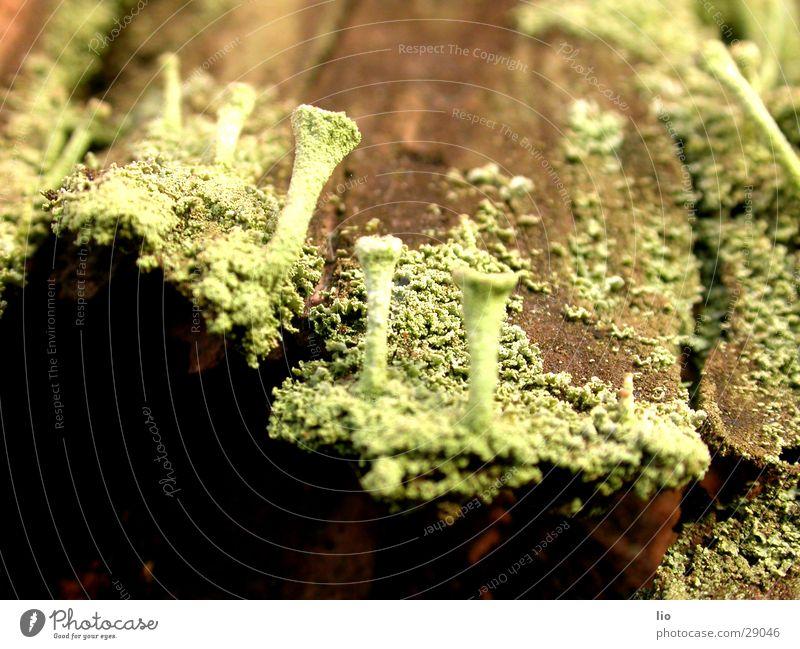 pilzchen Holz Baumrinde Pilz verfaulen Natur Makroaufnahme