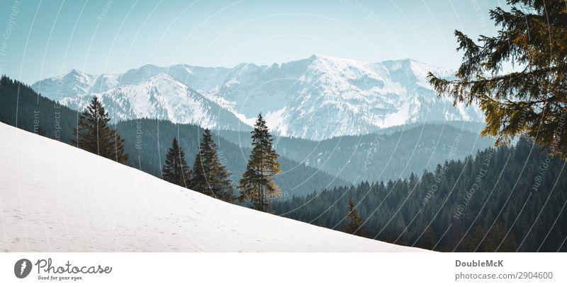 Alpenlandschaft mit Tannen, Schnee und Bergen Ausflug Ferne Freiheit Berge u. Gebirge wandern Natur Landschaft Luft Himmel Wolkenloser Himmel Schönes Wetter