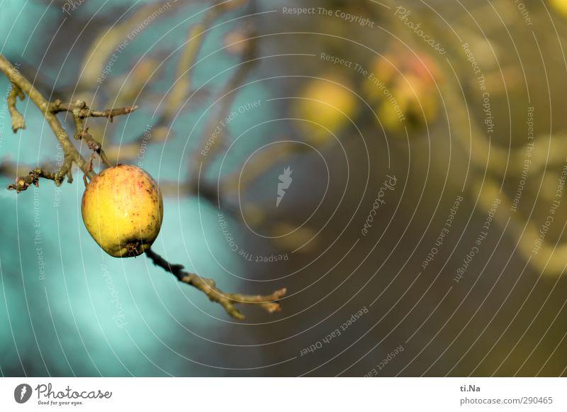 Unterbesetzt | Adam wars blau grün Pflanze Baum Winter gelb Herbst Garten Gesundheit natürlich Apfel hängen