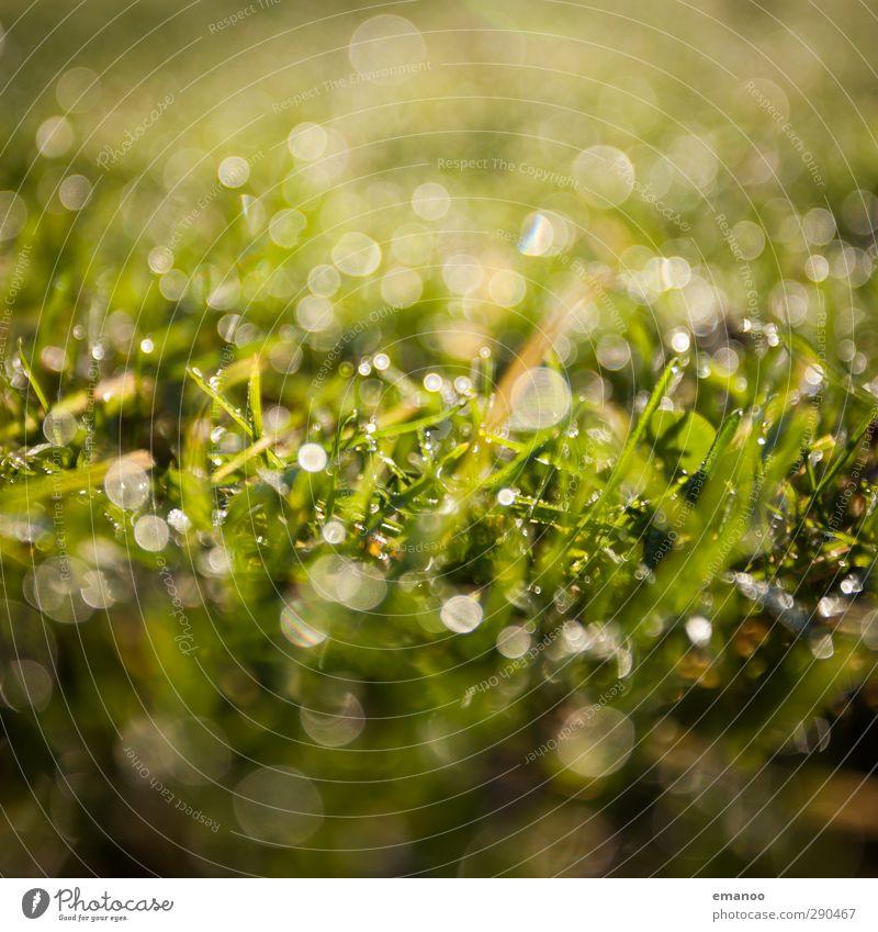 Grasland Umwelt Natur Landschaft Pflanze Wasser Wassertropfen Sonnenlicht Frühling Sommer Klima Wetter Regen Sträucher Grünpflanze Garten Wiese Feld Wachstum
