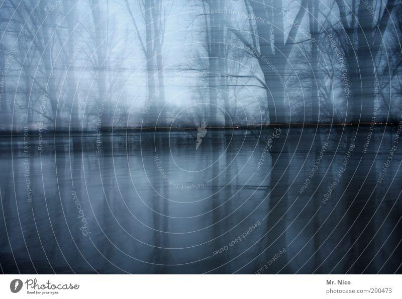 mystic river Umwelt Natur Landschaft Baum Flussufer bizarr Hochwasser geheimnisvoll spukhaft gruselig Angst mystisch kalt Illusion Winterwald Irritation Rhein