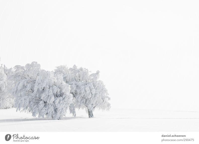 Textfreiraum rechts und oben Ferien & Urlaub & Reisen Winter Schnee Winterurlaub Umwelt Natur Landschaft Klima Wetter Wind Eis Frost hell Schwarzwald