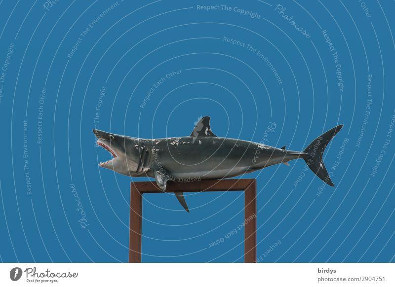 Hai - Stützpunkt Wolkenloser Himmel Schönes Wetter Wildtier Haifisch 1 Tier Aggression authentisch außergewöhnlich bedrohlich gruselig stark wild Wut blau grau