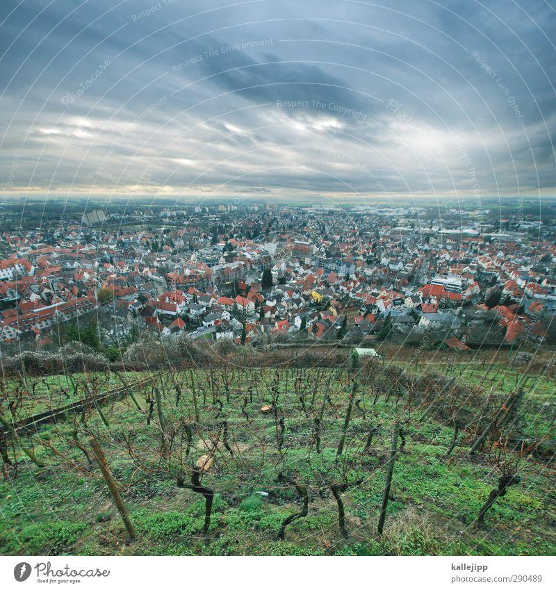 vettelheim Natur grün Stadt Pflanze Tier Wolken Landschaft Haus Umwelt Berge u. Gebirge Horizont Feld Erde Dach Industrie Wein