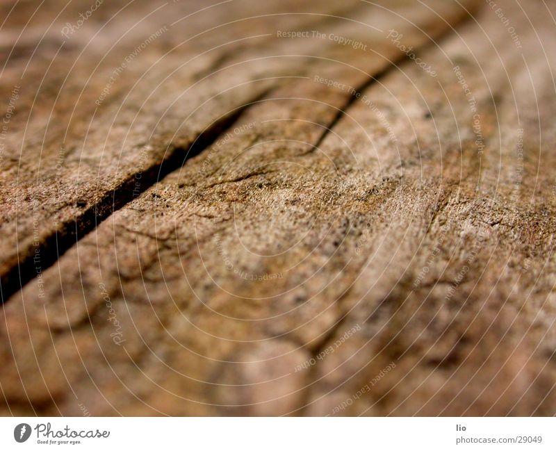 wood Holz trocken Baumstamm Maserung Riss Makroaufnahme