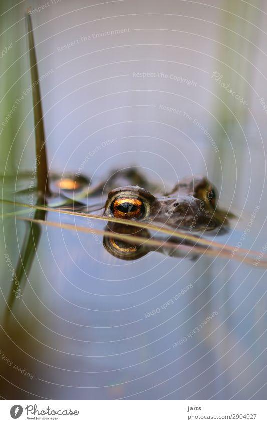stille am see Natur Auge natürlich See Schwimmen & Baden nass beobachten Seeufer Frosch Kröte