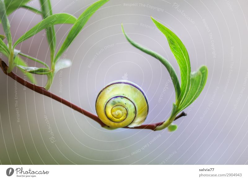Balance Natur Pflanze Tier Blatt ruhig Umwelt Garten Weide Zweig Stress Schnecke Spirale