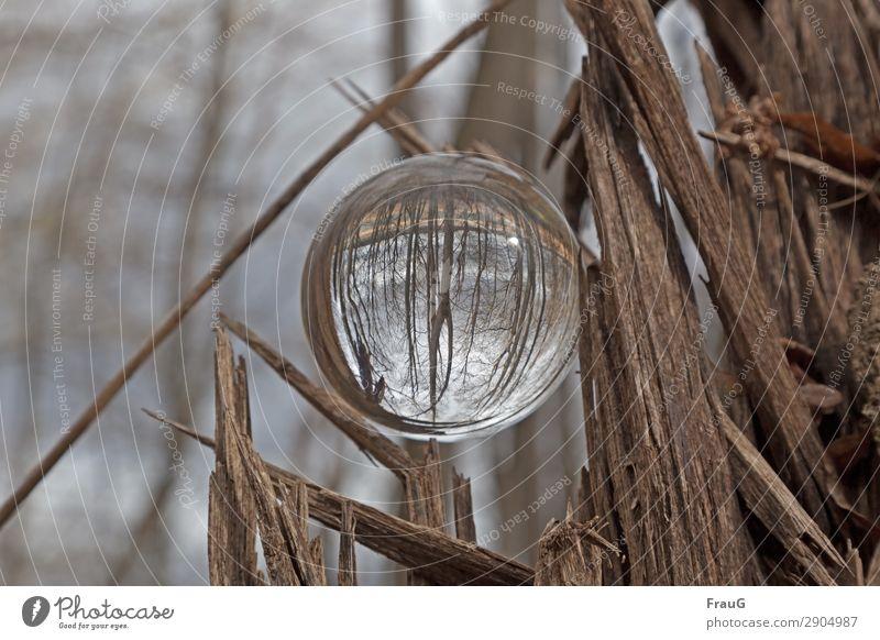 Der Wald steht Kopf Natur Frühling Baum Kugel Glaskugel Holz rund braun Lichtbrechung Totholz Farbfoto Außenaufnahme Tag