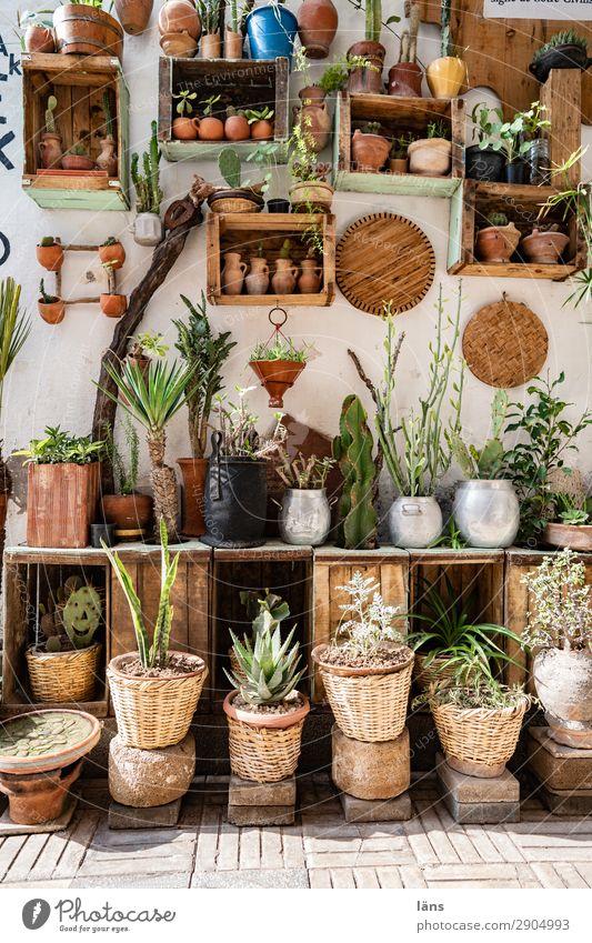 Urban Gardening - Innenhof Lifestyle Dekoration & Verzierung Pflanze Essaouira Marokko Afrika Stadt Altstadt Menschenleer Haus Mauer Wand Fassade Zusammensein