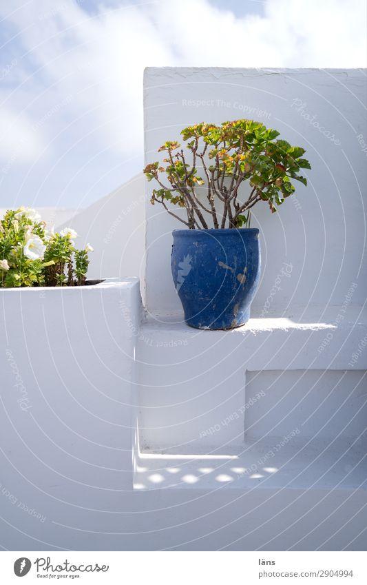 Dachterrasse Ferien & Urlaub & Reisen Tourismus Sommer Sommerurlaub Häusliches Leben Haus Essaouira Marokko Kleinstadt Altstadt Bauwerk Gebäude Mauer Wand