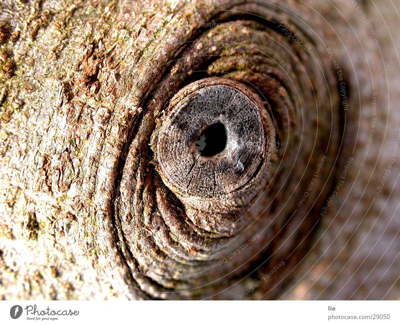 guckloch Holz braun Baumrinde Ast Loch Makroaufnahme