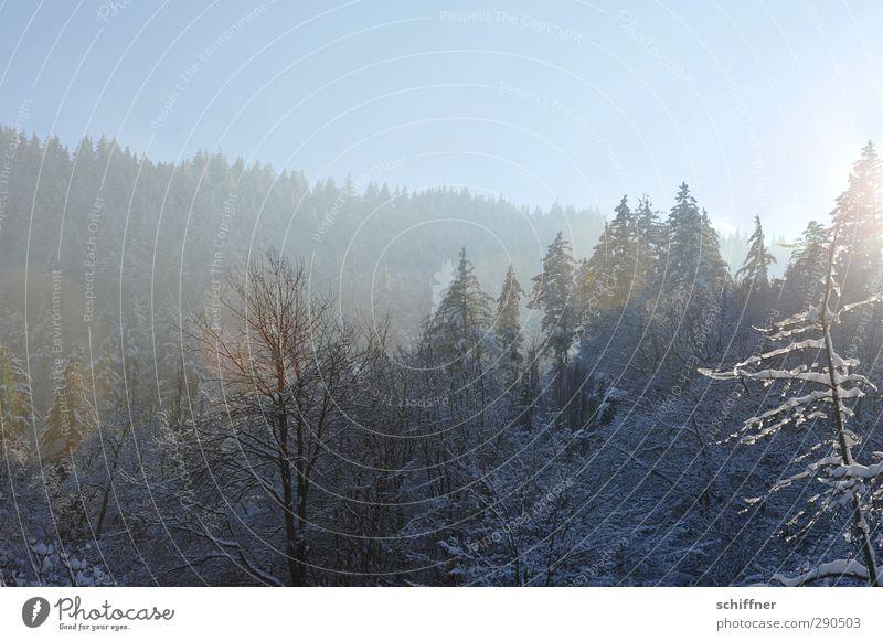 Baumloben Natur Pflanze Baum Landschaft Winter Wald kalt Umwelt Berge u. Gebirge Schnee Eis Klima Frost Ast Hügel Wolkenloser Himmel
