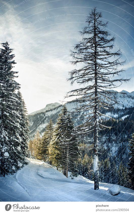 Der Winter Natur Baum Wald Berge u. Gebirge kalt Schnee Tourismus