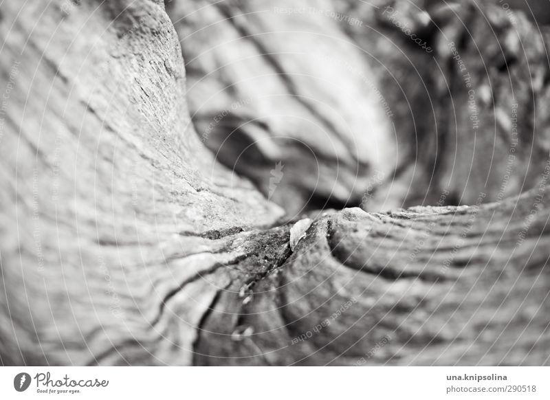 mit schwung Natur Baum Landschaft Holz natürlich rund trocken Baumstamm Baumrinde geschwungen morsch