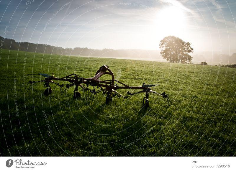 kreiselzettwender Sommer Baum Sonne Umwelt Wiese Herbst Gras hell Metall Feld frisch Schönes Wetter Landwirtschaft Weide Bauernhof Tau