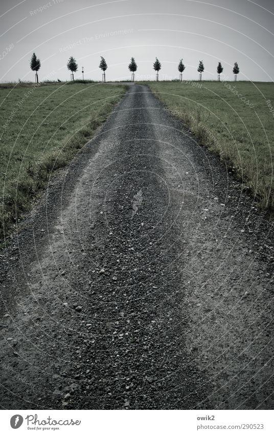 Prozession Umwelt Natur Landschaft Pflanze Himmel Horizont Baum Gras Verkehrswege Wege & Pfade Schotterweg dunkel Konzentration Ordnung Präzision Team